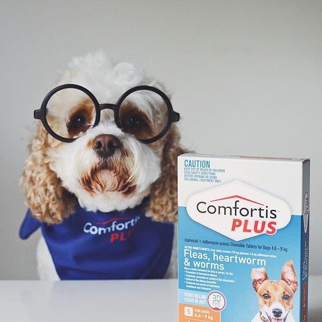 Comfortis PLUS 2017